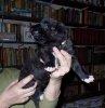 pupjes van Looklike